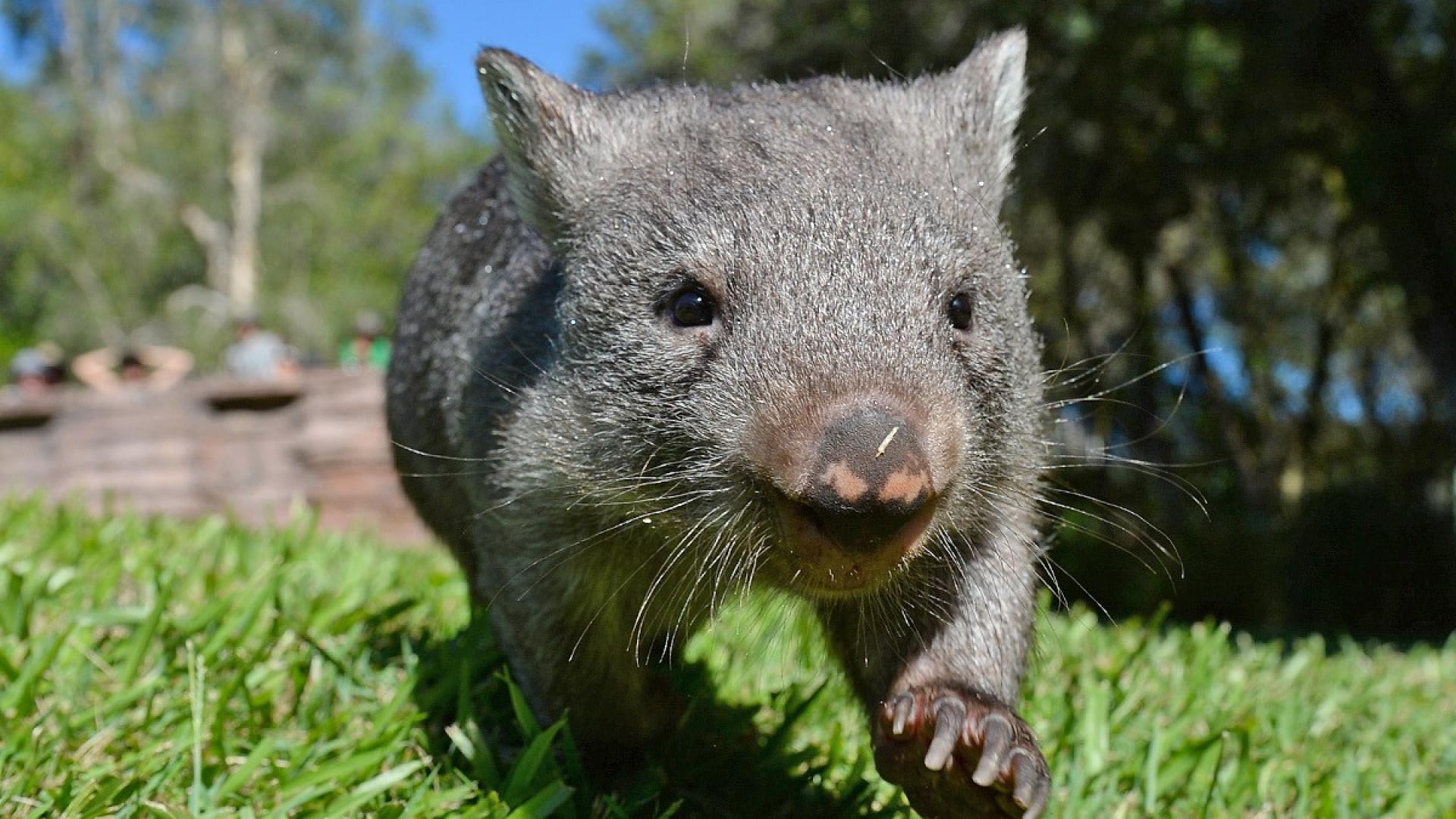 Картинки редкие животные австралии
