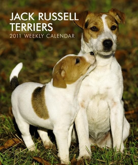 jack_russell_terriers_2011_hardcover_weekly_eng__1_.jpg