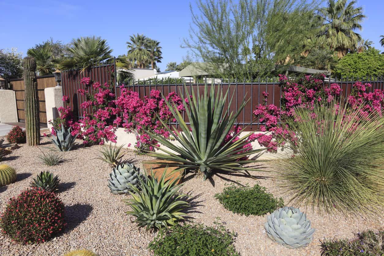 succulent_garden_example_apr11_2.jpg